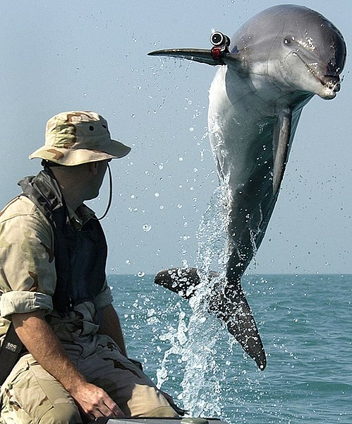File:NMMP dolphin with locator.jpeg
