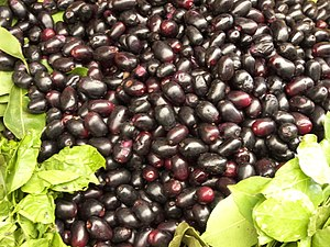 Syzygium cumini - Biodiversity of India: A Wiki Resource for Indian